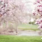 鼻チーンは間違い!?花粉症対策10選と便利グッズ、治療法を網羅的に紹介