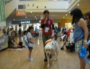 盲導犬イベントららぽーと