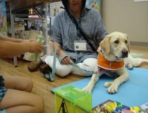 盲導犬イベント-ららぽーと
