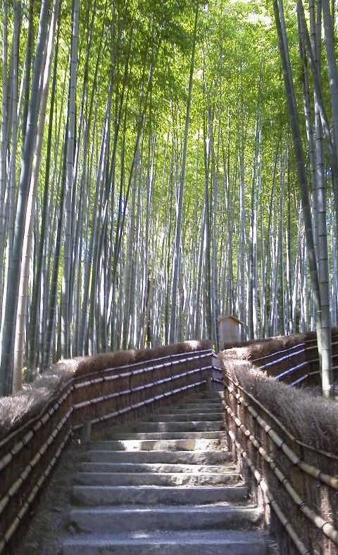 化野念仏寺の竹林-京都