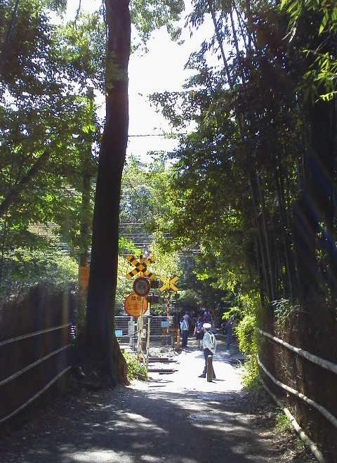 竹林の小径線路-京都