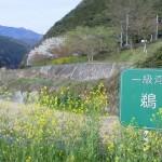 京都トロッコ列車の電話予約からチケット受取までの手順とおすすめの座席