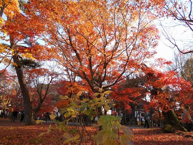 東福寺の紅葉2