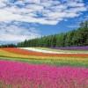 昭和シェル石油の「選べる電気」が春のキャンペーン中で節約チャンス!その内容、注意点は?