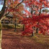 京都の紅葉完全ガイド!見頃、色付く順番、おすすめの穴場などまとめ!