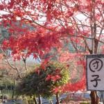 【画像あり】京都の紅葉は12月上旬だと遅い?実際に見てきた!見頃のおすすめ場所は…?