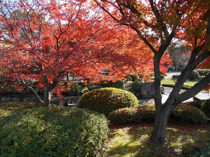 東寺の紅葉2
