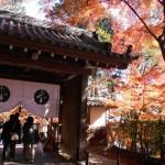 京都駅・嵐山から光明寺へのアクセス(行き方)を解説!電車と臨時バス。駐車場、拝観料は?