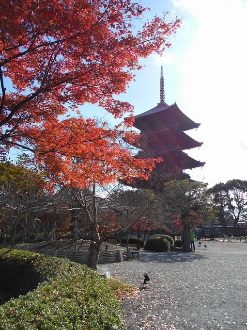 東寺の紅葉1
