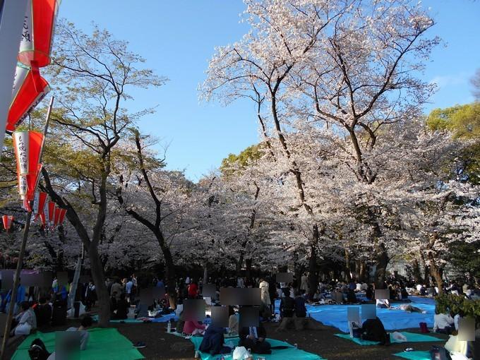 上野公園-桜