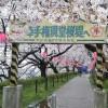 幸手の権現堂堤で桜を見てきた(雨)!バスでのアクセス方法や駐車場の混雑具合、時刻表などを紹介