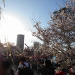 463円!東京の桜の名所6ヶ所を電車で効率的にまわるルートを紹介!名所ごとの写真あり