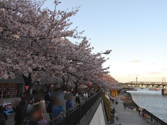 隅田公園-桜
