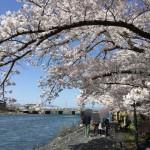 【悲報】茨城県境町の激得ふるさと納税返礼品『ツーリスト旅行券』『HISギフトカード』が9月末で終了へ…。