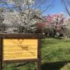 京都府立植物園の割引・アクセス情報、再入園する方法などまとめ!