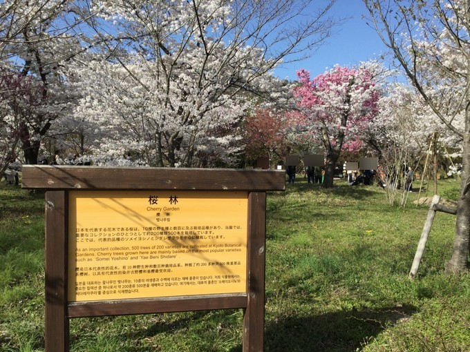 桜林-京都府立植物園