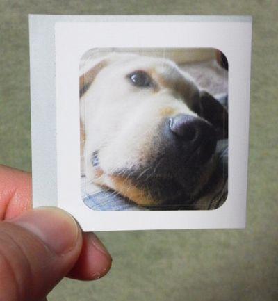 盲導犬のシール