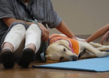 盲導犬イベント-ららぽーと新三郷