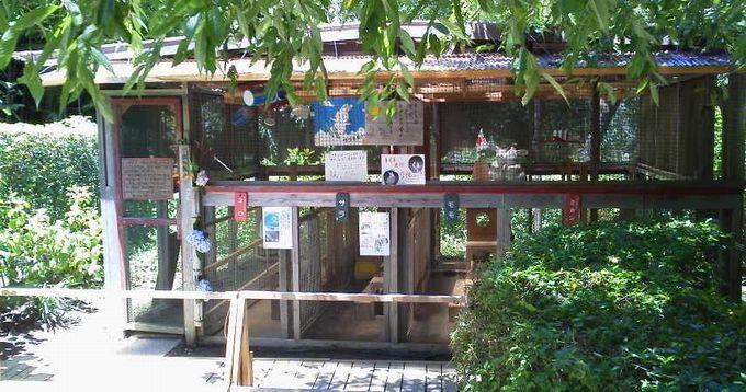 うさぎ小屋-明月院