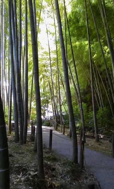 竹林-明月院