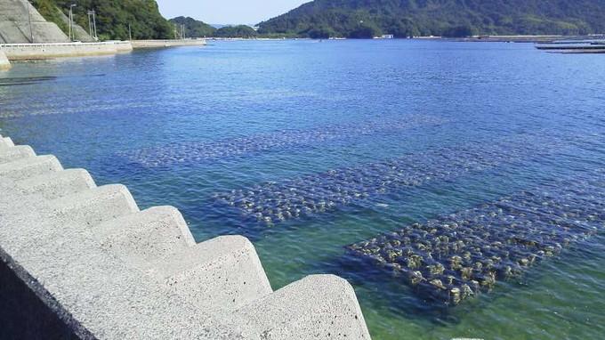 牡蠣の養殖-江田島