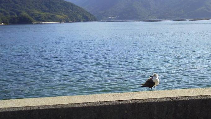 鳥-江田島
