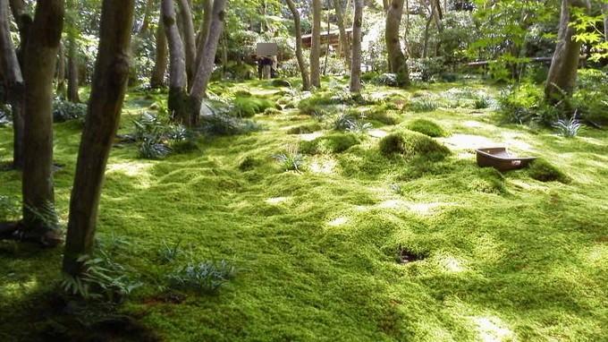 祇王寺の苔-京都