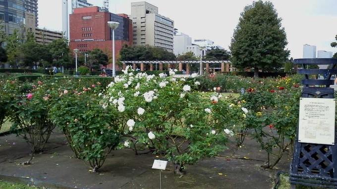 山下公園ローズガーデン-横浜