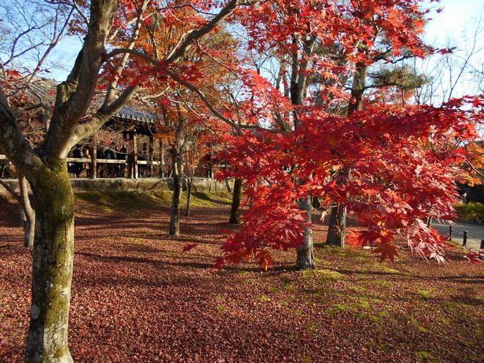 東福寺の紅葉3