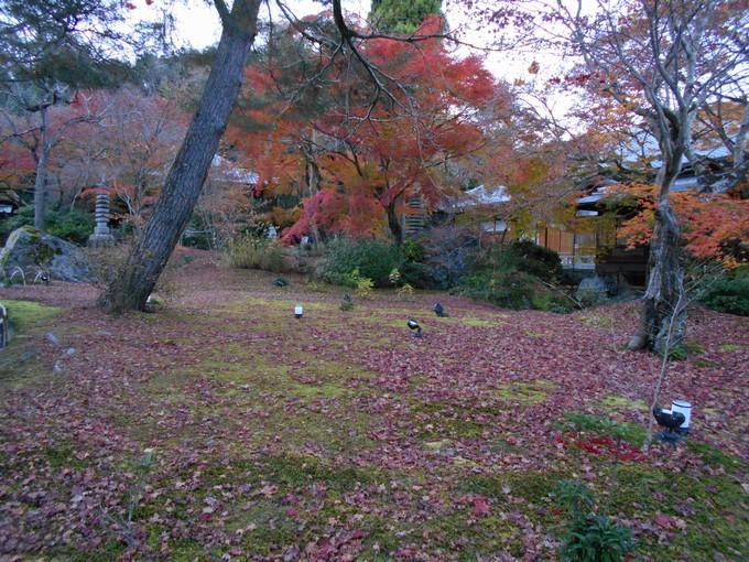 宝厳院の紅葉1