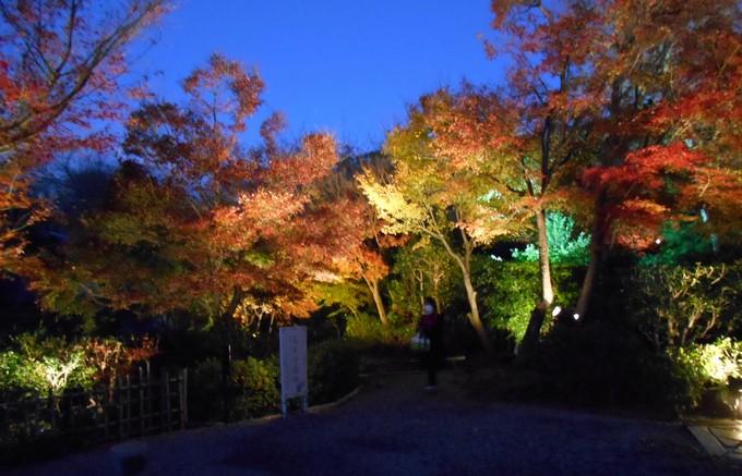 高台寺の紅葉1