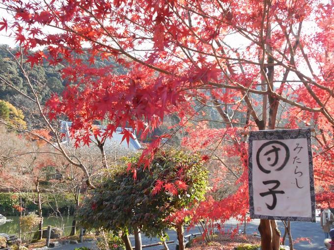 永観堂の紅葉2