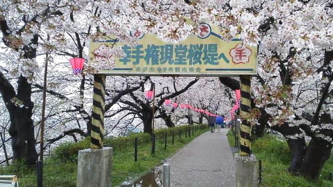 桜まつり-幸手権現堂堤