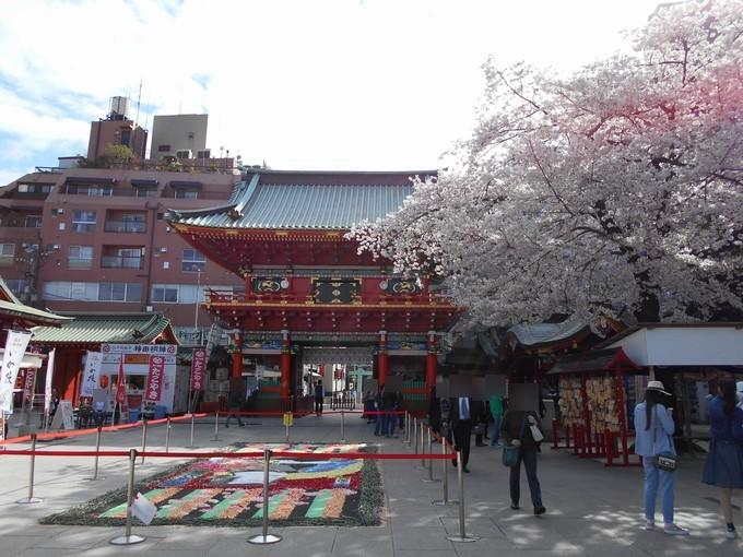 神田明神-桜